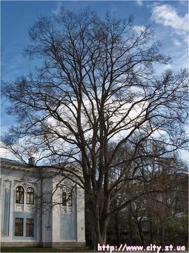 Краєзнавчий музей міста Житомира III